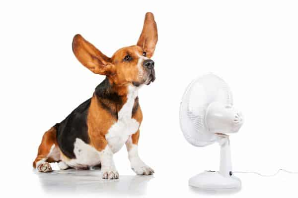 When to replace your air conditioner | 5 Telltale Signs!